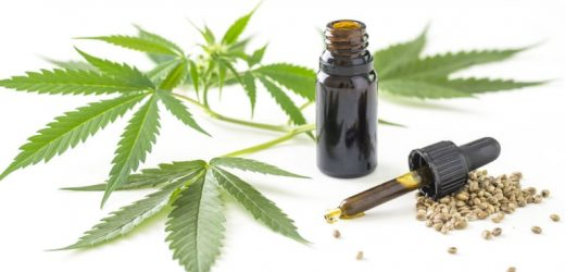 Planting and extracting health benefits from CBD