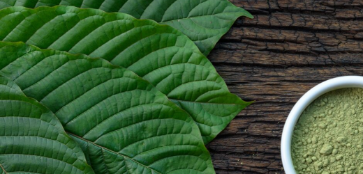 What's The Hype About Kratom? Check This Easy Guide!