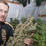 Is Alcohol treated differently from Cannabis with Olympic Athletes?